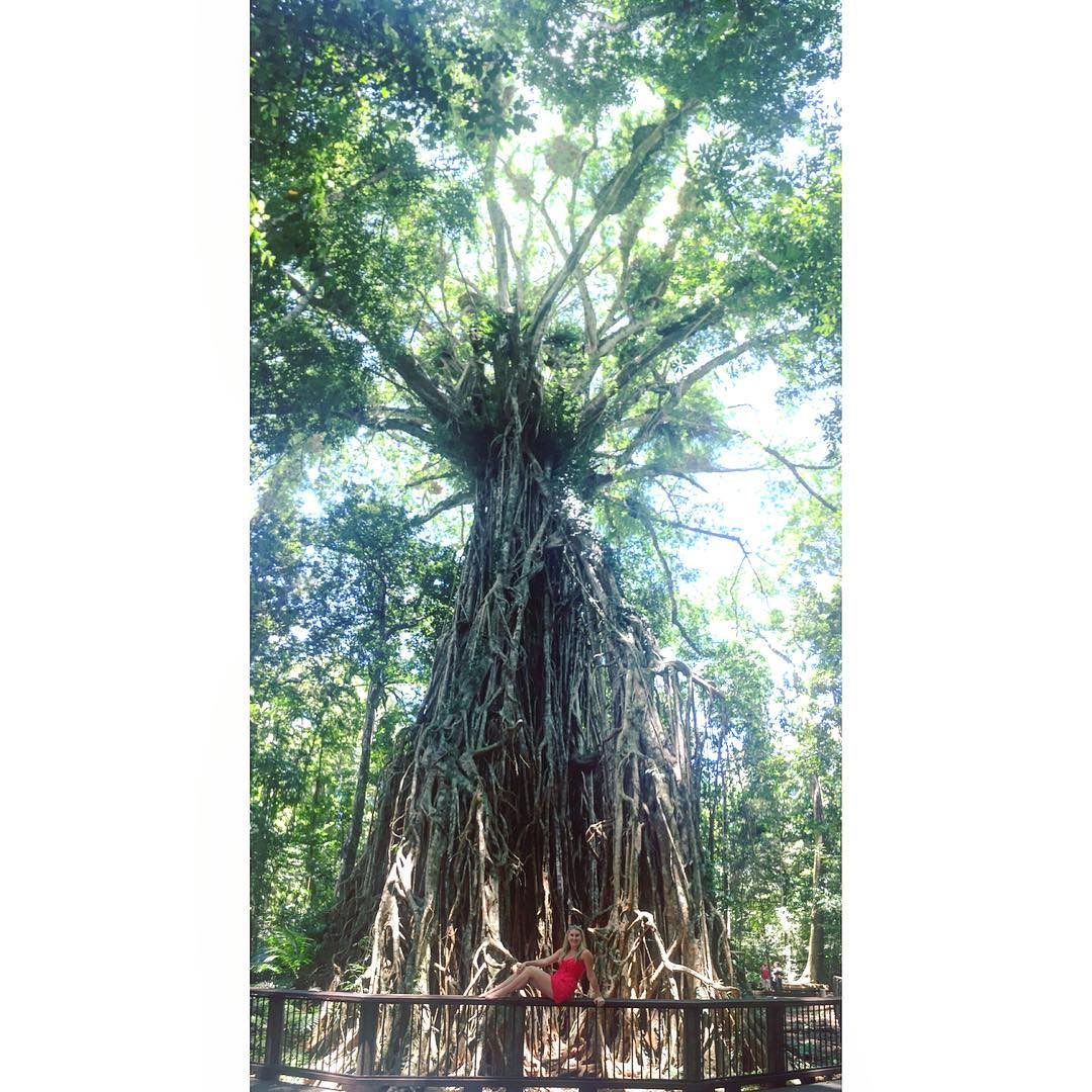 Things To Do Around Lake Tinaroo - Cathedral Fig Tree by _chelseacavo_