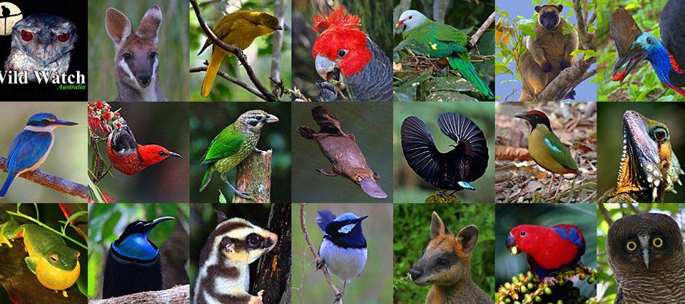 Wild Watch Australia
