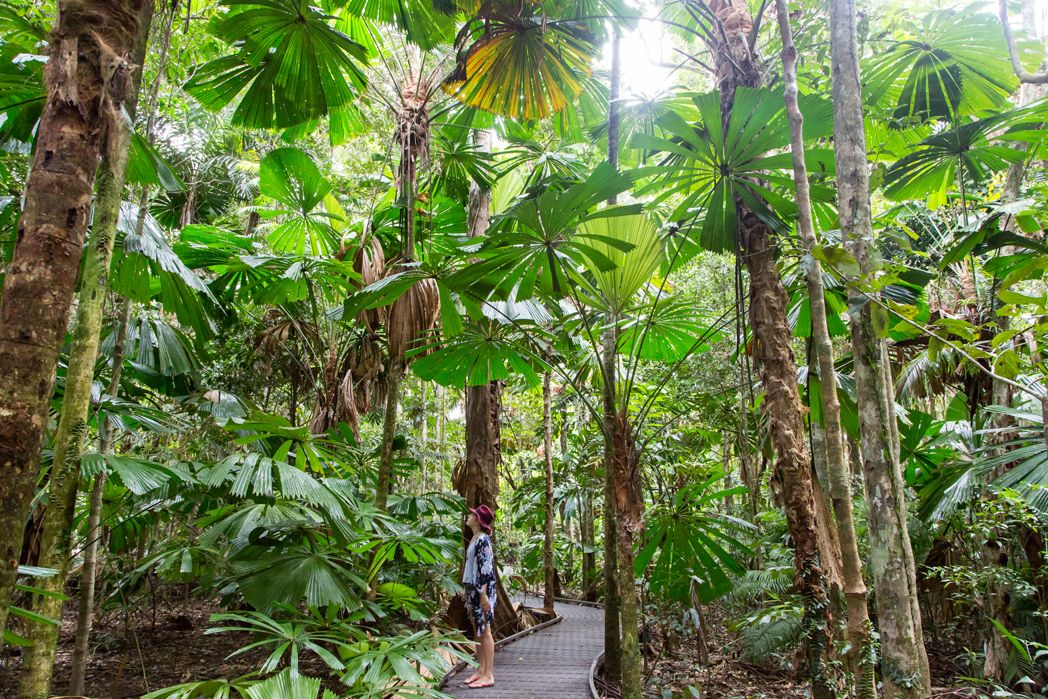 Port Douglas And Daintree Tropical North Queensland